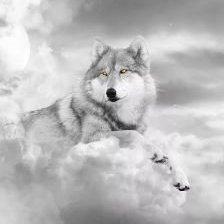Grey Dreamer